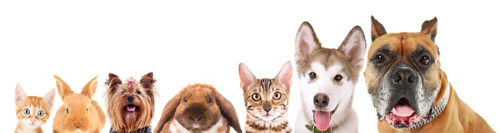 זכיינות חנות חיות